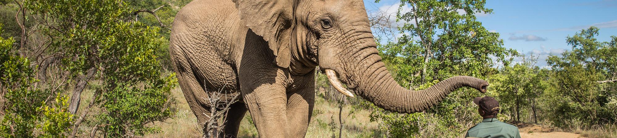 International Safari Tours